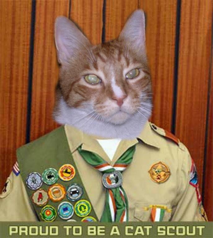 Sammy The Cat scout  http://onespoiledcat.wordpress.com