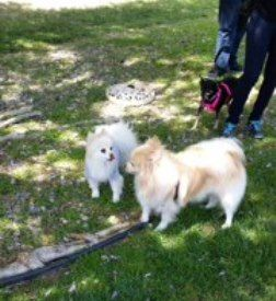 Violet's Meet & greet with Rocky her potential furever Brother