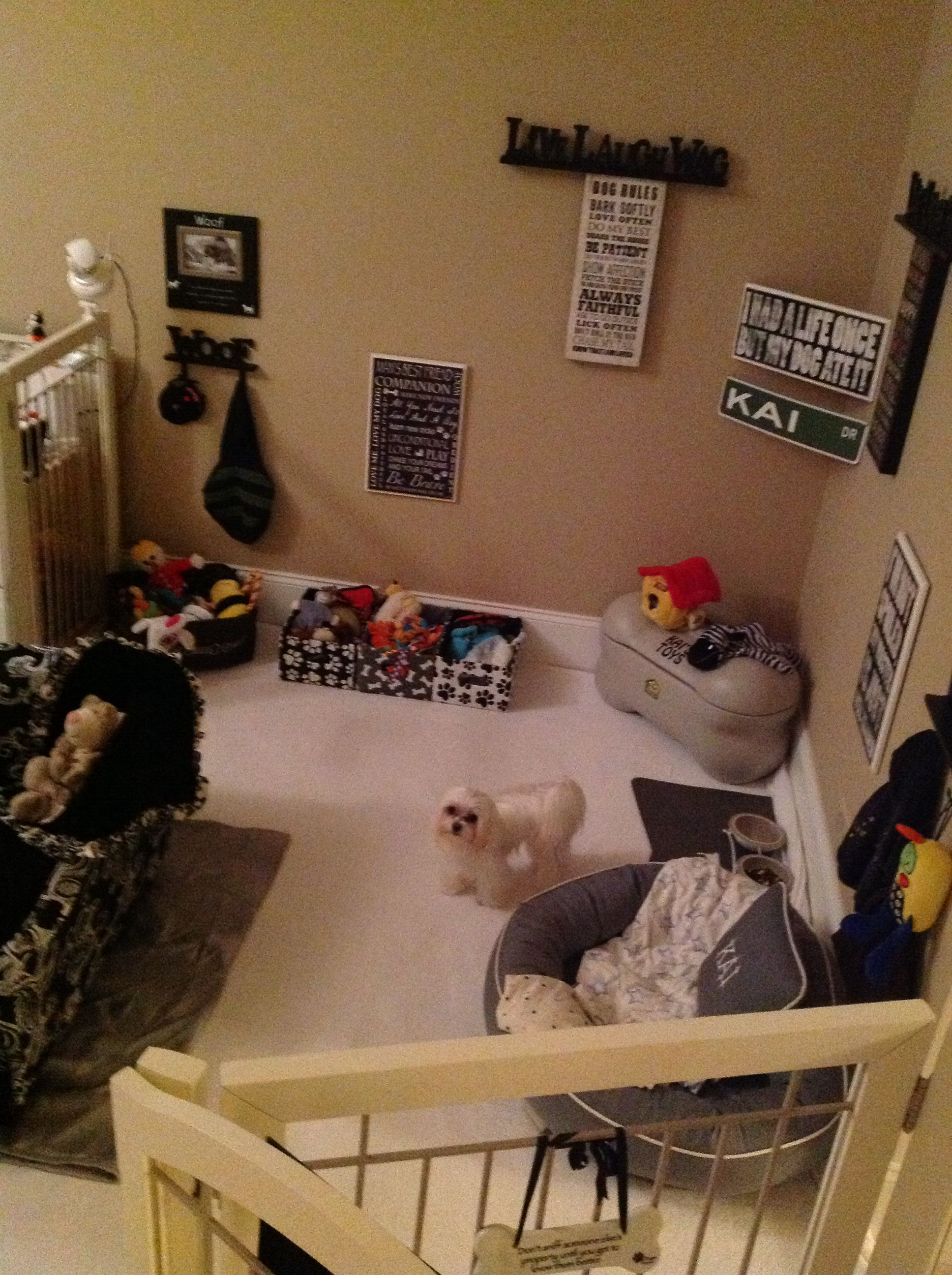 Kai's Dog Room. And I thought my dogs were spoiled