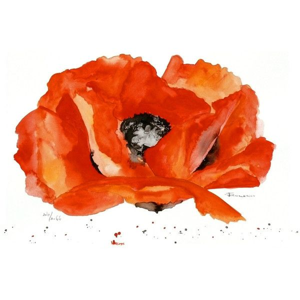 Flower poppy Watercolor Painting Original ($79) ❤ liked on Polyvore