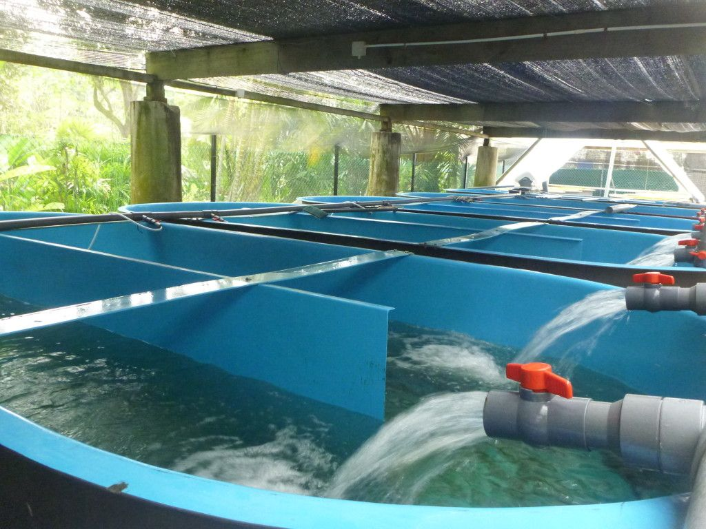 Aquaculture home diy aquaculture grow food not grass for How to grow hydro in a fish tank