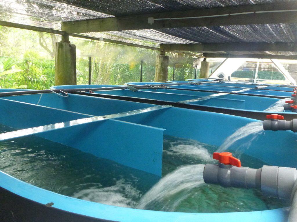 Aquaculture home diy aquaculture grow food not grass for Aquaculture fish tanks