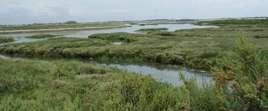 Citizen scientists to investigate our saltmarshes