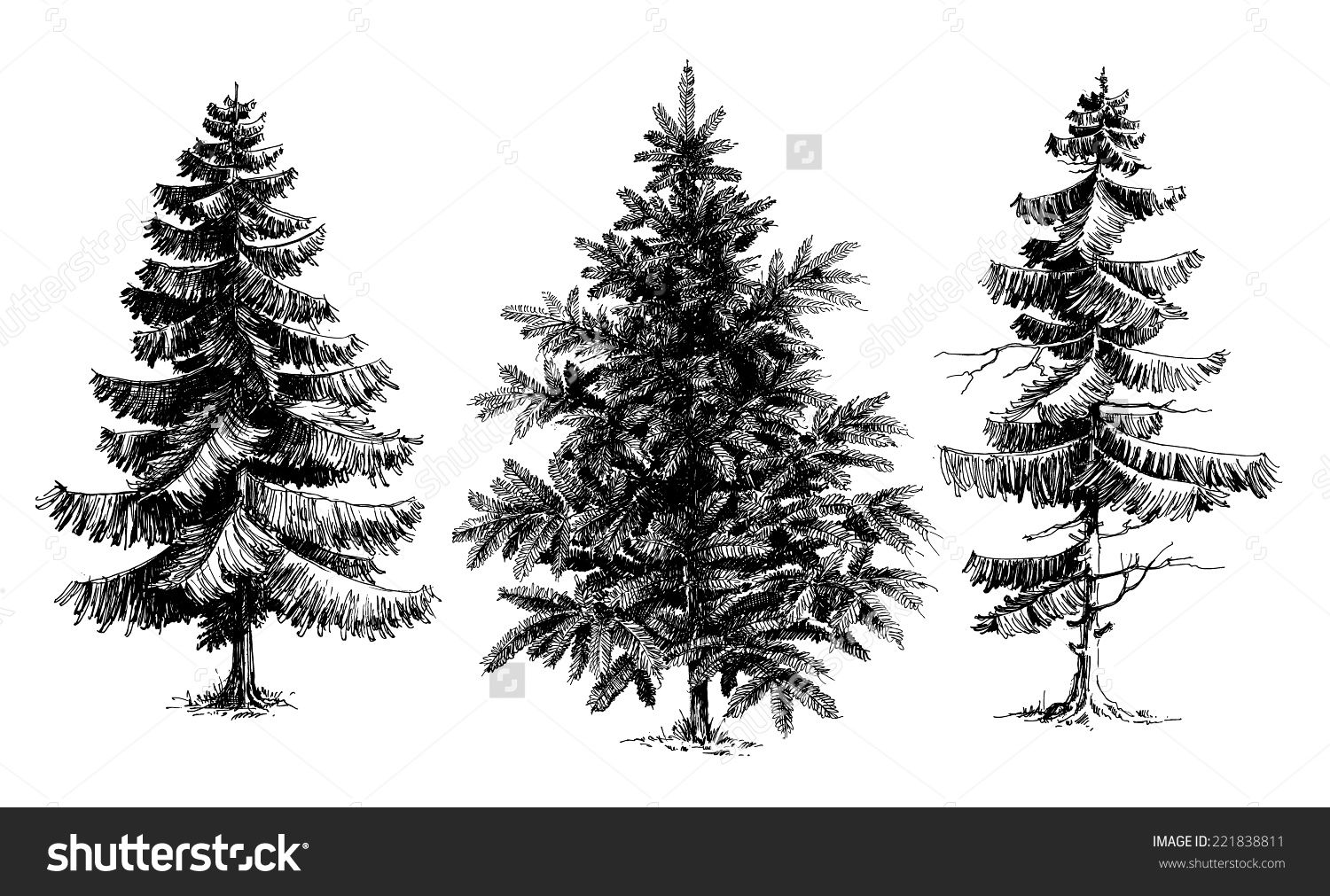 pine trees christmas trees realistic hand drawn vector set isolated over white buy this stock vector on shutterstock find other images
