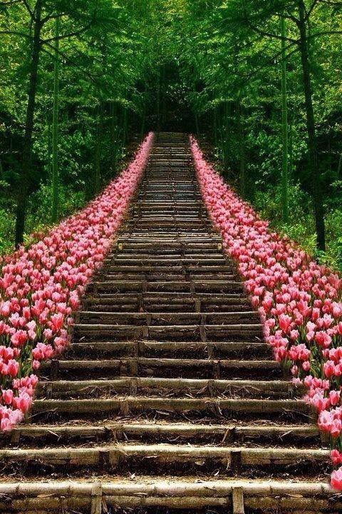Escaleras con flores escaleras infinitas pinterest for Escaleras infinitas