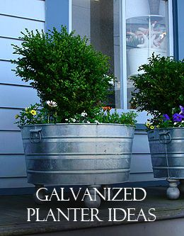Galvanized planters everything from a trough to grandmas for Tin tub planters