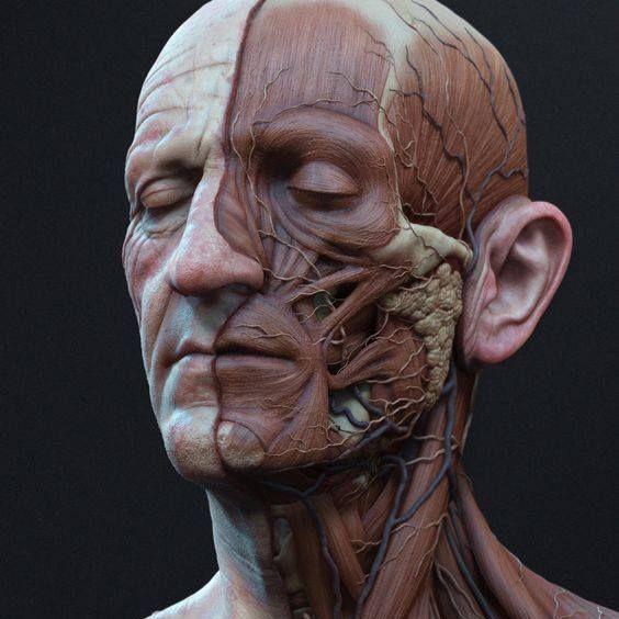 Pin de Yana Tsysliuk en Botox   Pinterest   Anatomía