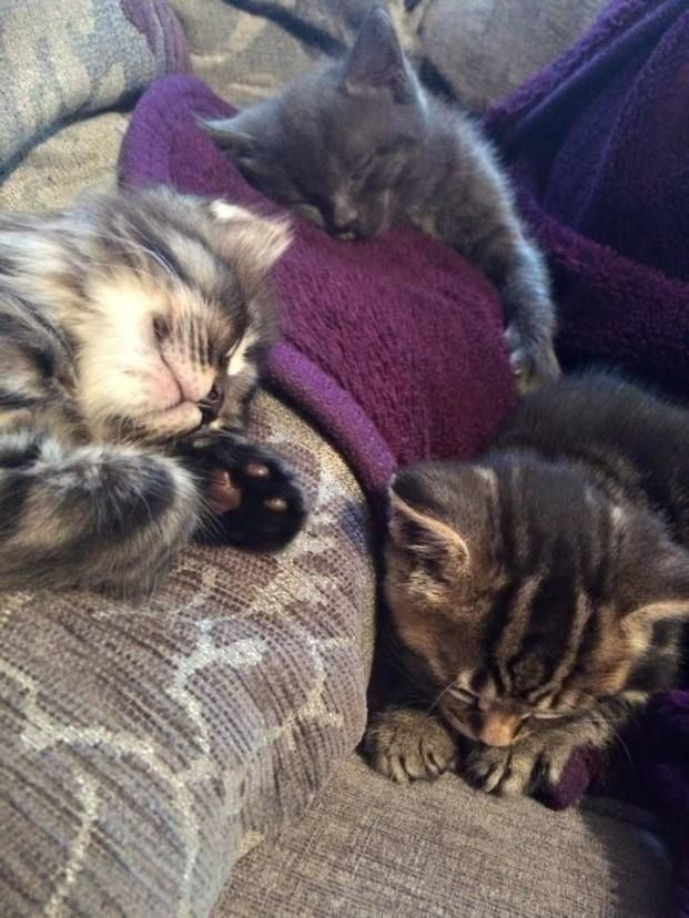 Your Cats 20th December 2014 With Images Cats Sleepy Cat Cute Animals