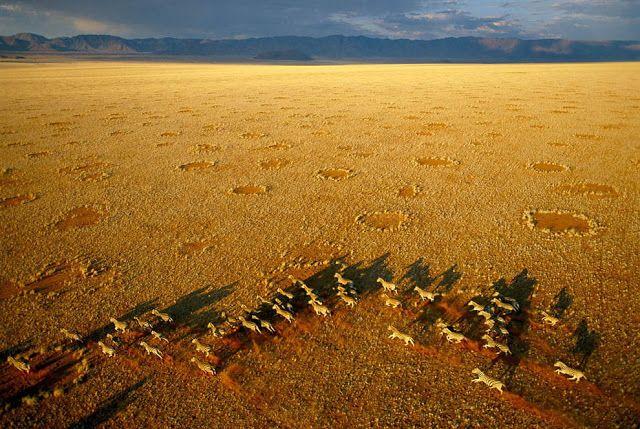 Las cebras y los círculos de hadas en el Namib Rand Nature Reserve en Namibia.   By_George Steinmetz