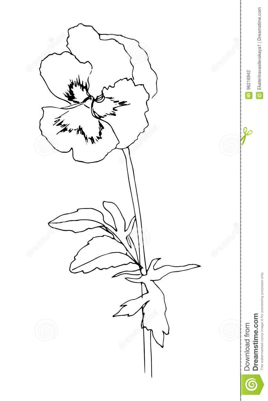 Black Hand Drawn Pansy Flower Sketch Style Vector Illustration Stock Vector Illustration Of Painting Graphic 9621 Pansies Flowers Pansies Flower Drawing