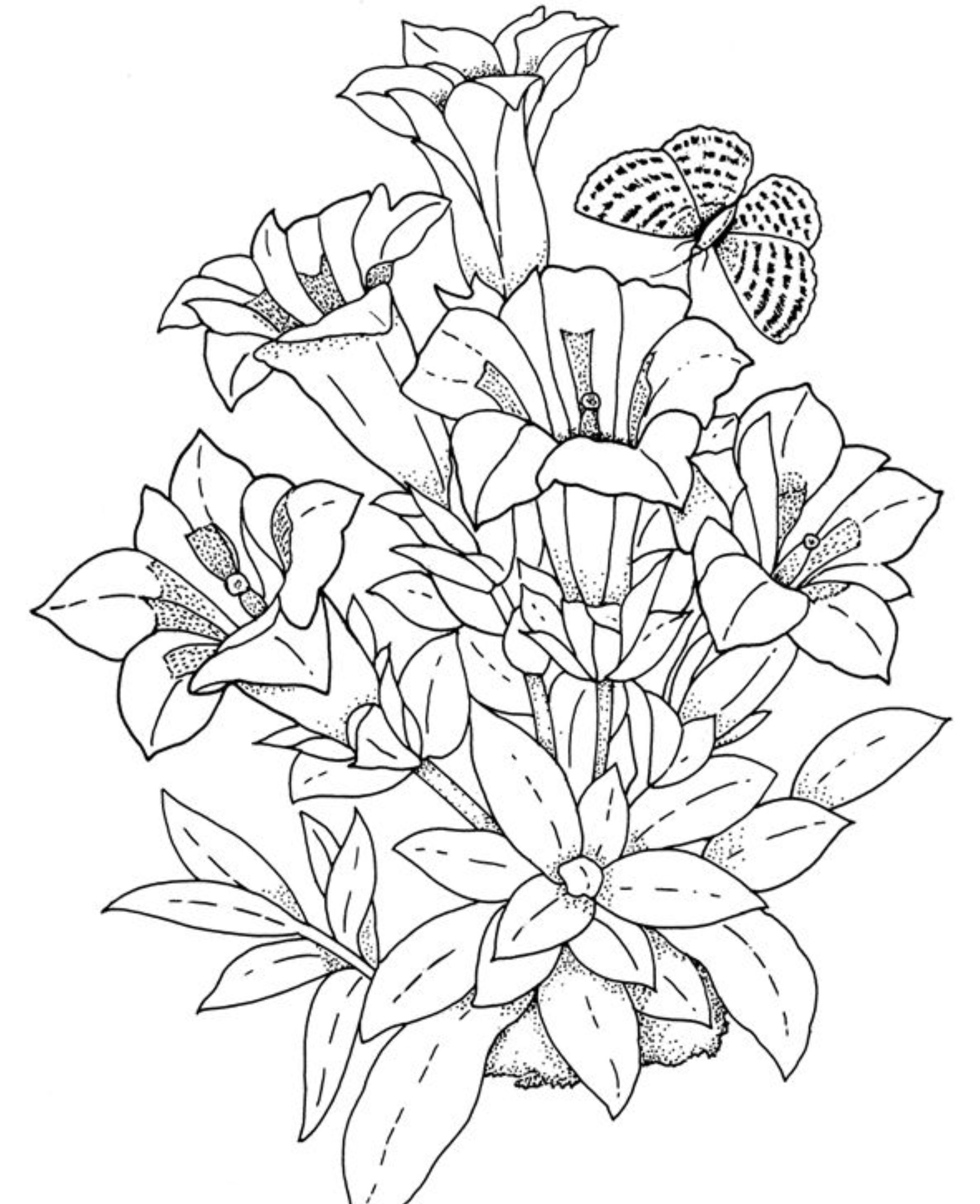 Flower coloring in pages - Download And Print Realistic Flowers Coloring Pages