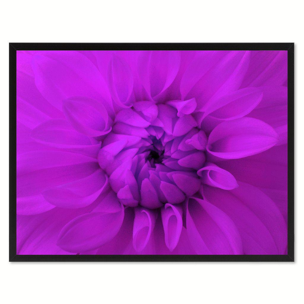 Purple Chrysanthemum Flower Framed Canvas Print Home Dcor ...
