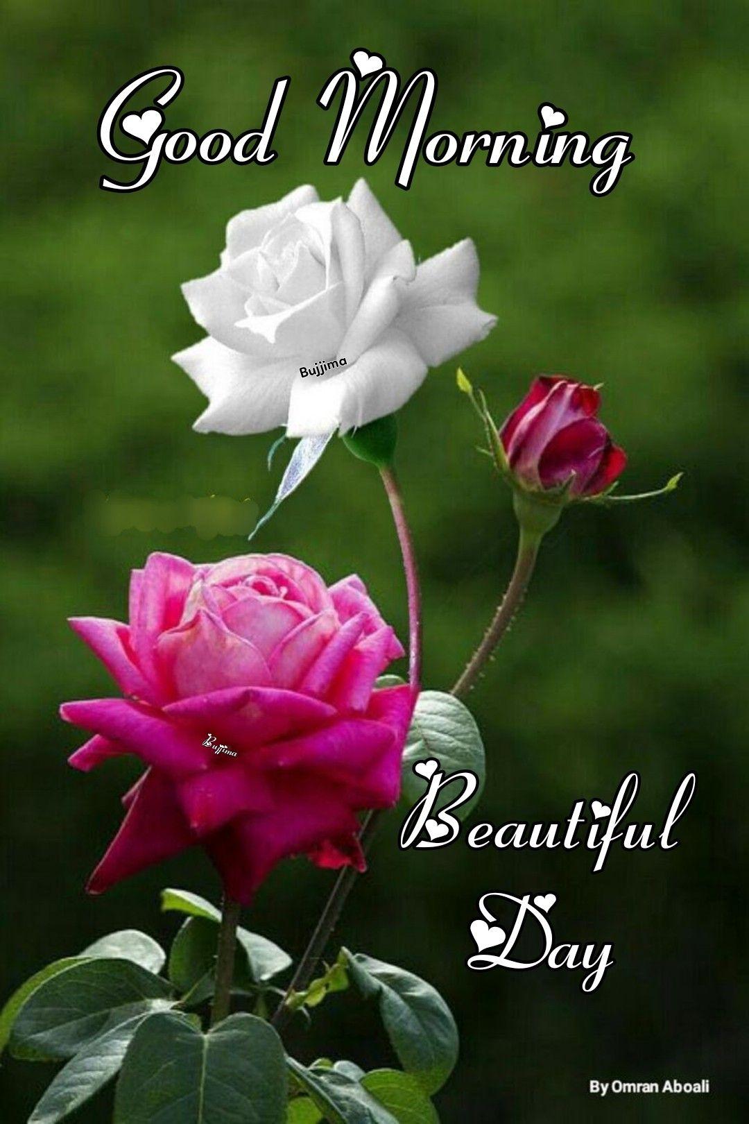 Greeting Good Morning Roses Good Morning Beautiful Flowers Good Morning Flowers