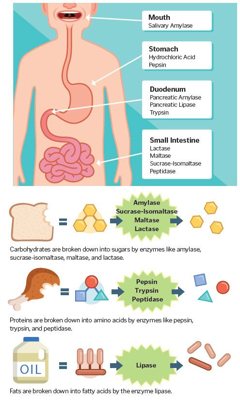 how to break down excess fat in the gut
