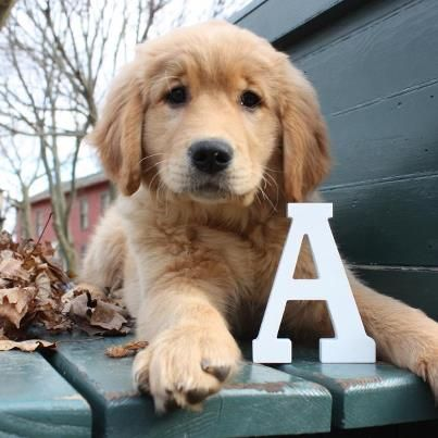Lindsey S Akeela Is A Big Girl Now But We Love This Puppy Picture