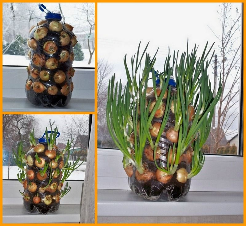 Have Onions Year Round With This Diy Vertical Onion