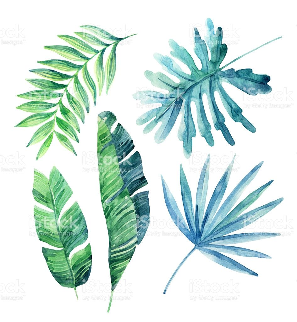Watercolor Tropical Leaves Set Isolated On White Background