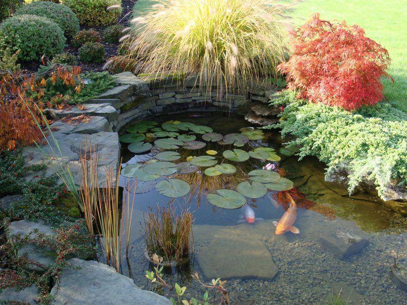 Estanque jard n japon s pinterest pond plants and for Estanque japones