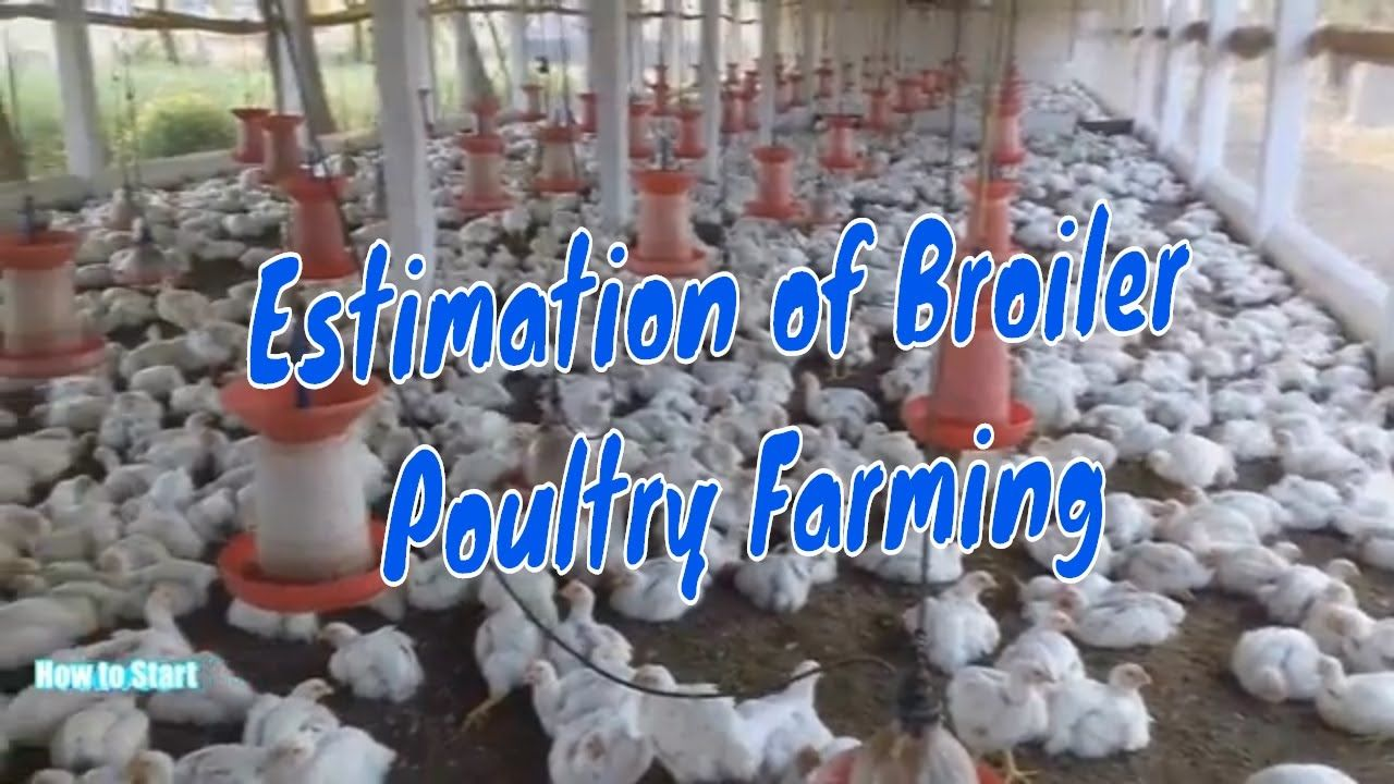 Estimation of Broiler Poultry Farming /Poultry Chicken