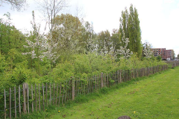 Het Tiny Forest Rukt Op Trouw Tuin Achtertuin Planten