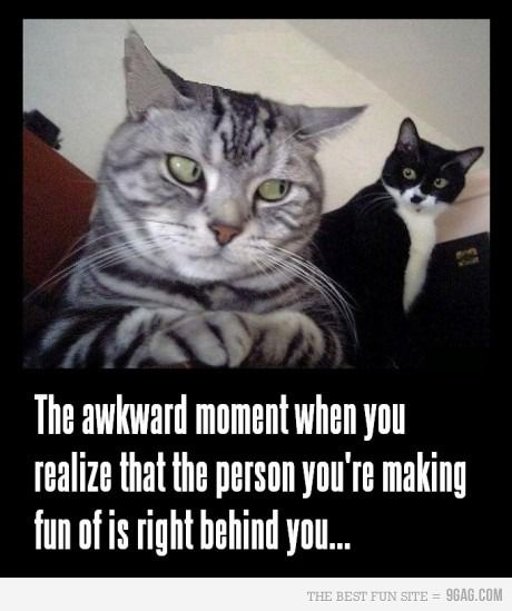 So Embarrassing Awesome Pinterest Funny Funny Animals And