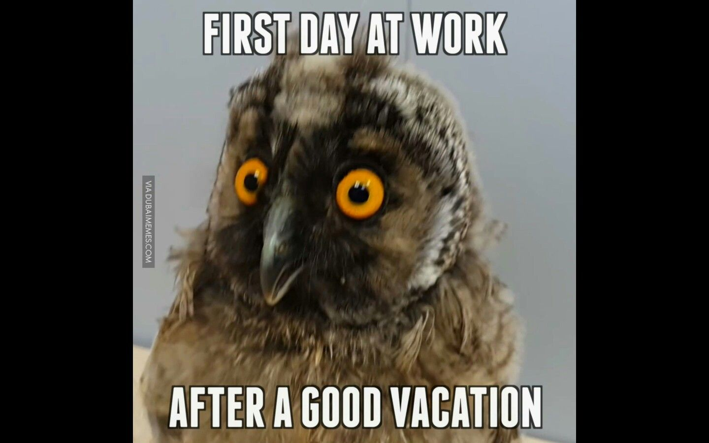 Pin By Ginger Blossom On Vacation Back To Work After Vacation First Day Of Work