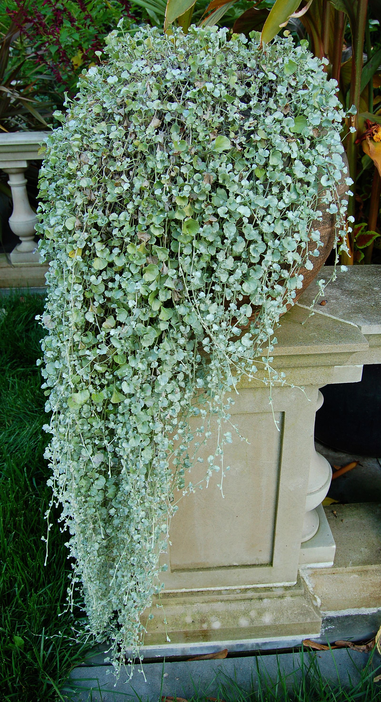 Drought Tolerant Plant Ideas On The Decorating Forum In