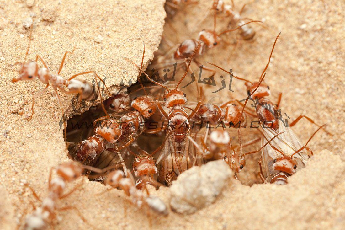 تفسير رؤية النمل في الحلم