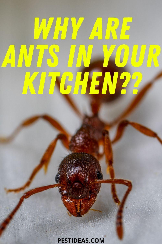5dc2c5d5ae96d3599d67a71647018035 - How To Get Rid Of Tiny Ants In Bathroom
