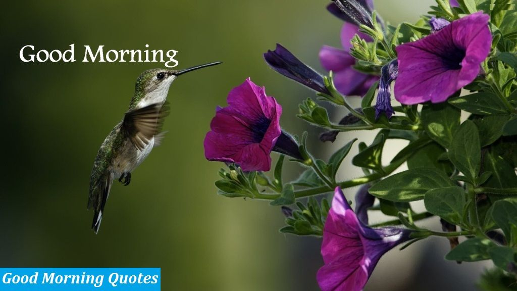 Download The Latest Good Morning Images Wallpapers And Pictures For Free This Cute Wallpa Hummingbird Wallpaper Purple Flowers Wallpaper Hummingbird Flowers