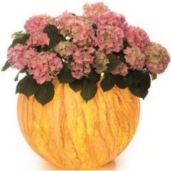Photo of Epstein Pflanzgefäß Flora Sahara 48,00 cm , 65,00 cm 20345 Epstein-Design