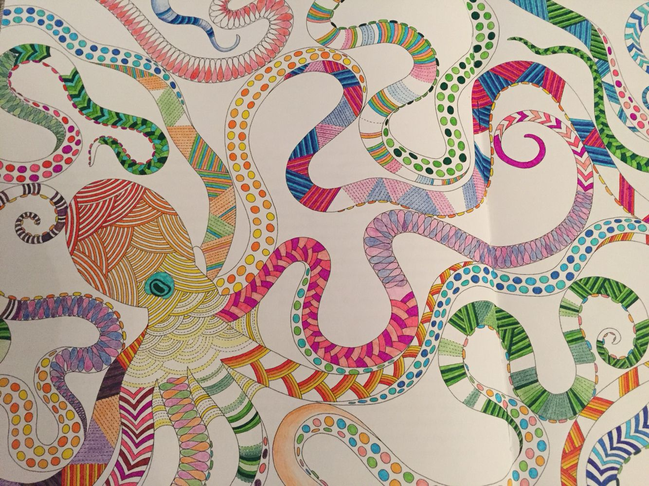 Octopus Page Of Animal Kingdom By Millie Marotta