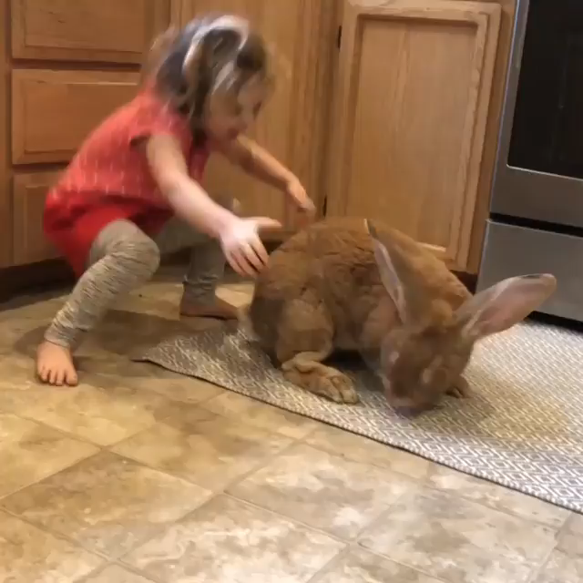 ♡♥A girl hugs her huge pet rabbit GIF pic - click on GIF pic in lower right corner to watch in full screen in a better looking black background♥♡