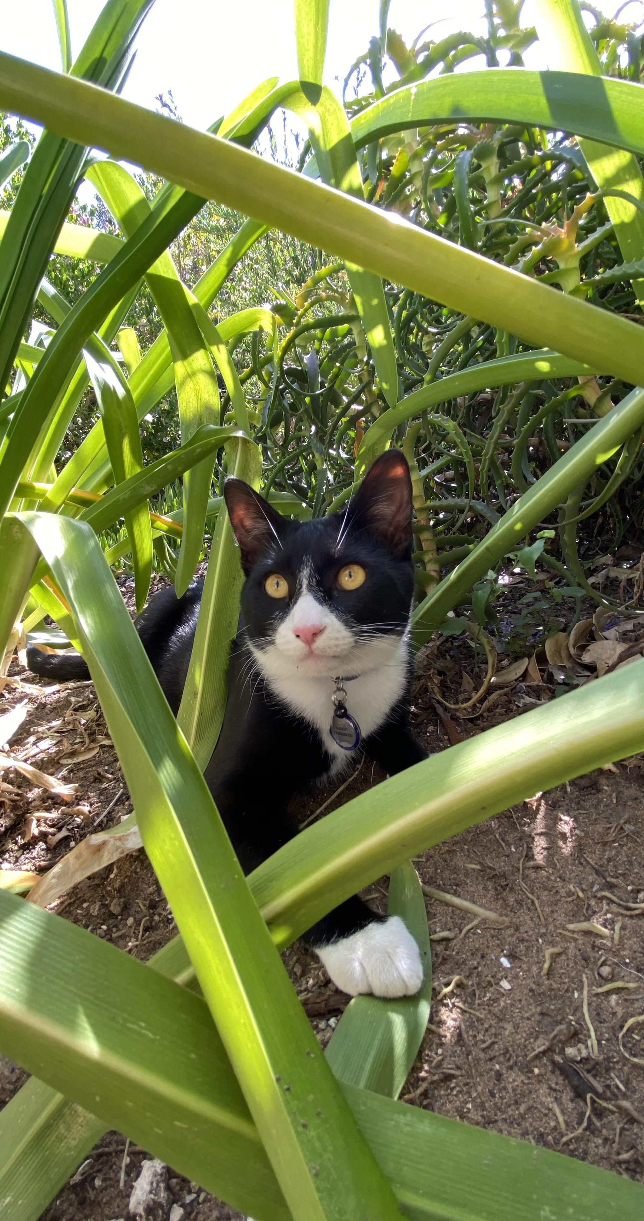 ITAP of my cat in the garden#PHOTO #CAPTURE #NATURE #INCREDIBLE
