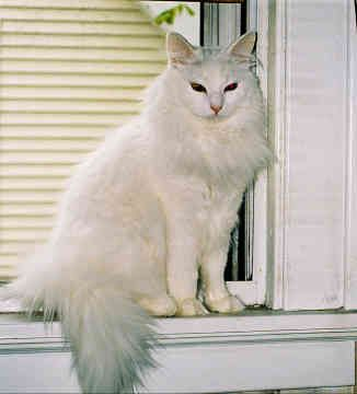 Cat Breeds A To Z Breeds Information On Cat Breeds From A To Z