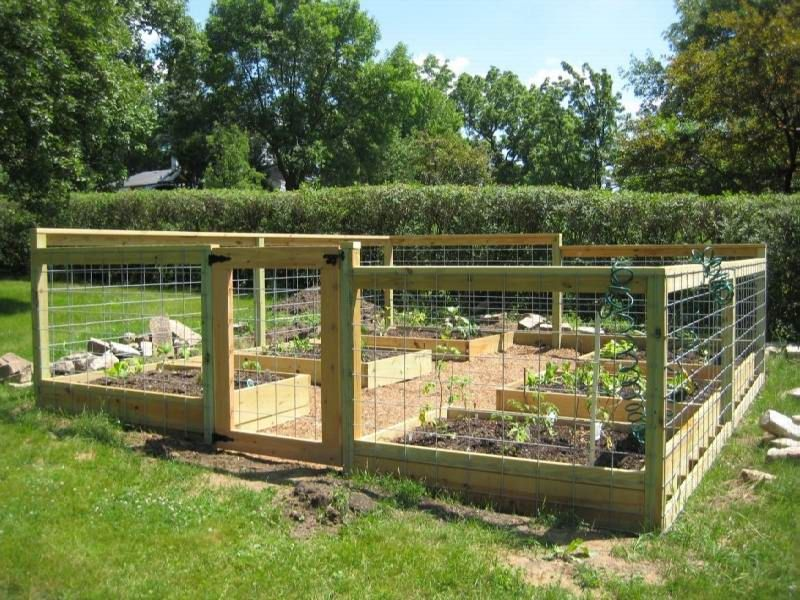Planning A Vegetable Garden Layout Raised Beds | Backyard Ideas ...