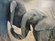 elephants - Google Search