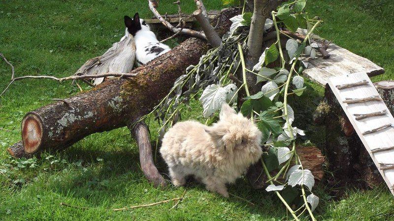 Spielzeug Fuer Kaninchen