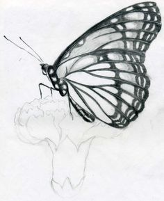 Butterfly Pencil Drawings You Can Practice With Images Pencil