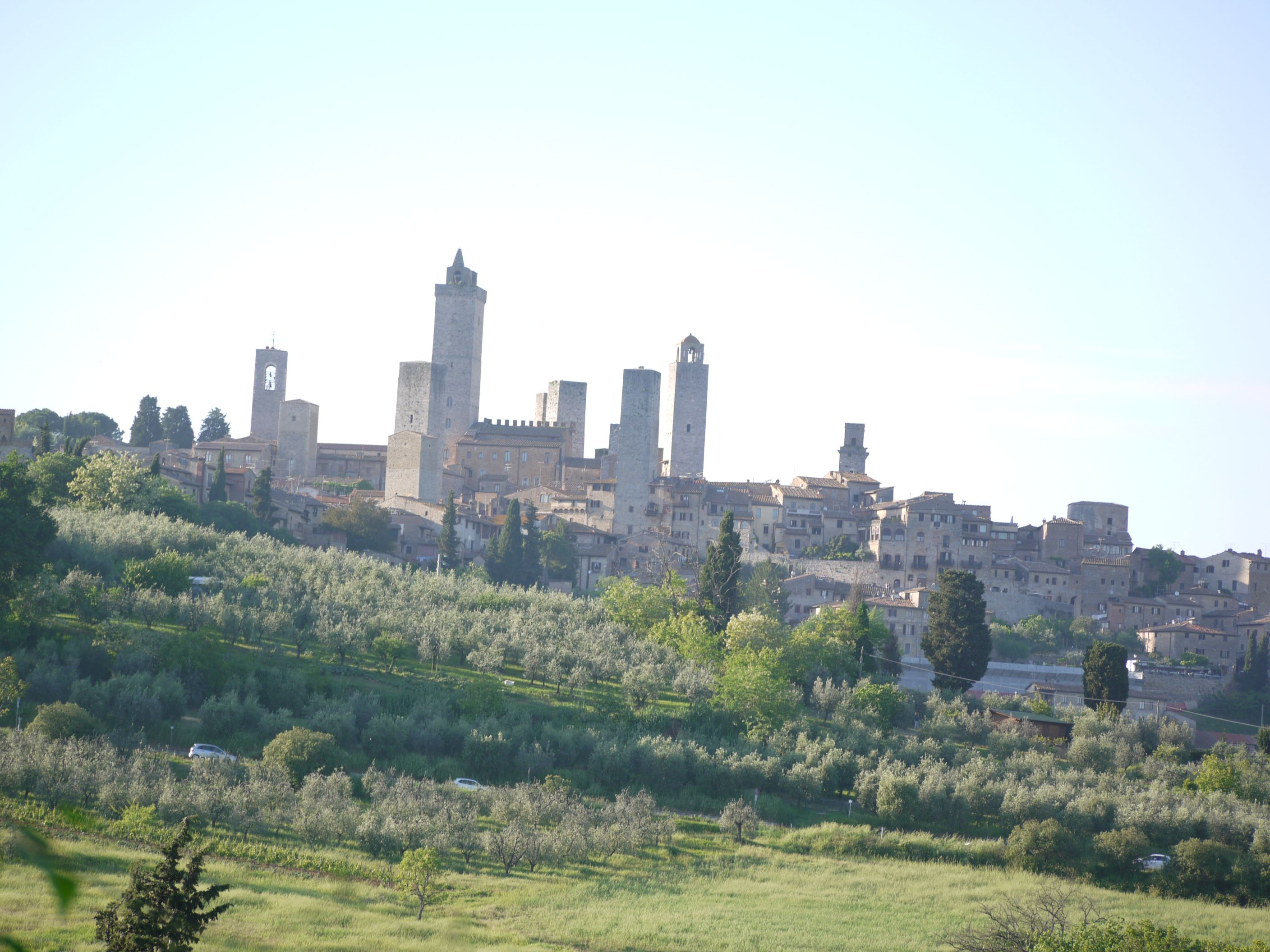 Veduta di San Gimgnano dal nostro uliveto View of San Gimignano from our olive grove