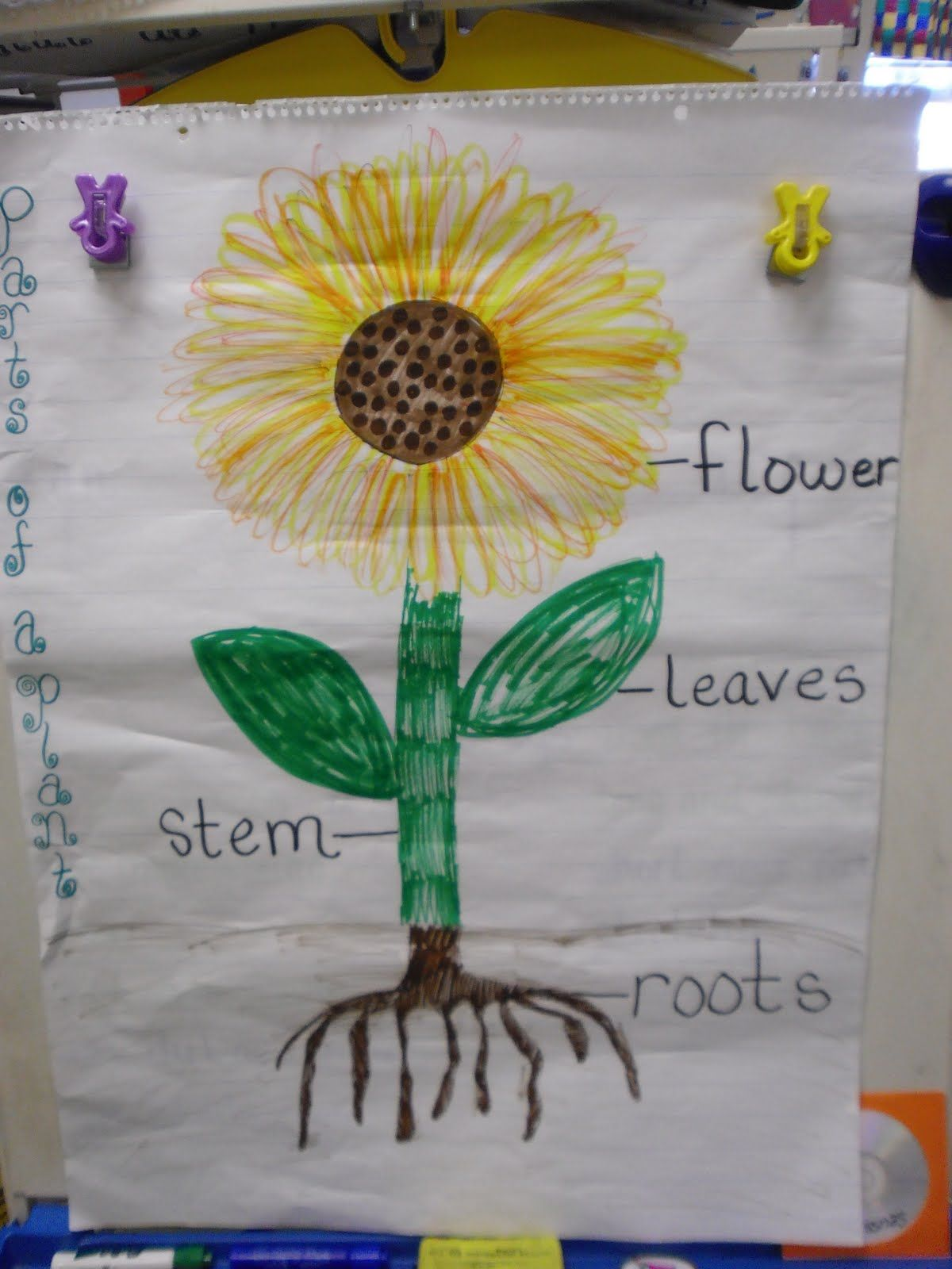 Label Plant Kindergarten