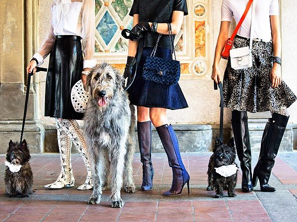 From Homeless to High Fashion! Rescue Dogs Pose for Town & Country  Dogs, Pet Style