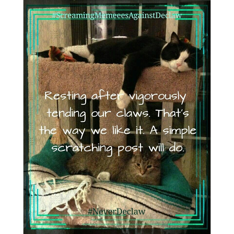 Dont declaw Scratching post, Post, Simple