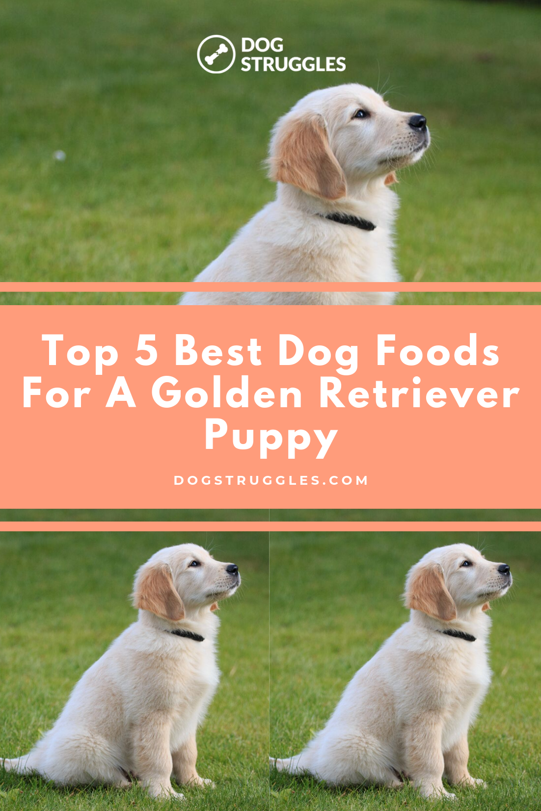 The Golden Retriever Is One Of The Most Popular Dog Breeds In The World And It S Not Hard To See Why This Medium Sized D Puppies Dogs Golden Retriever Puppy