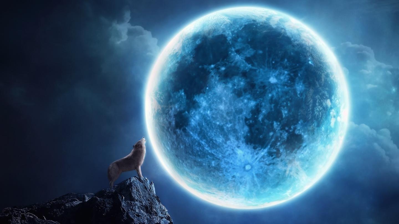 Lobo Aúllando: Lobo-aullando-en-una-noche-de-luna-llena_7141