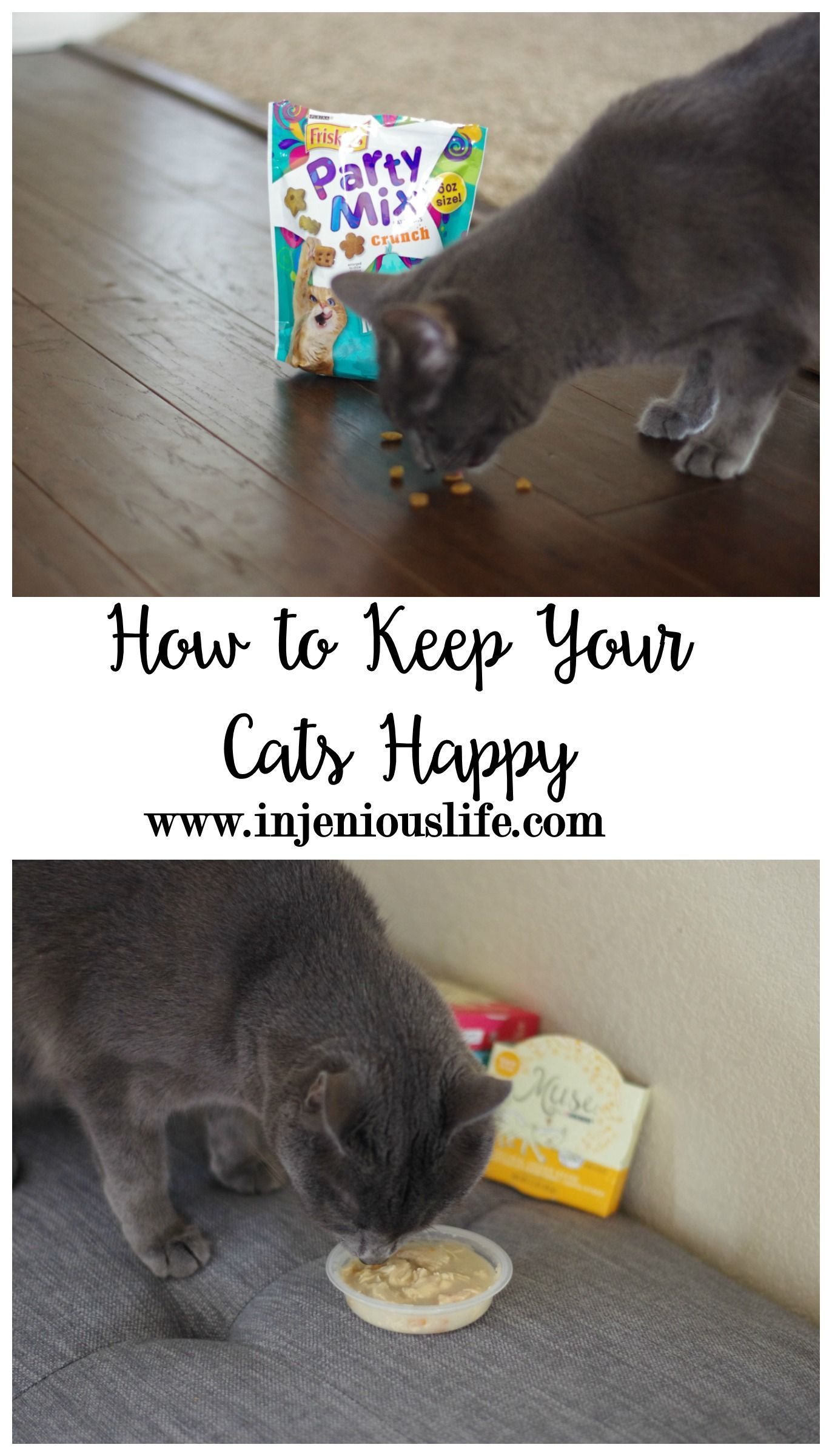 How To Keep Your Cats Happy Benadryl For Cats Pet Diy Projects Cats