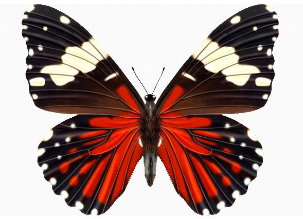 Lepidoptera おしゃれまとめの人気アイデア Pinterest Valeriy