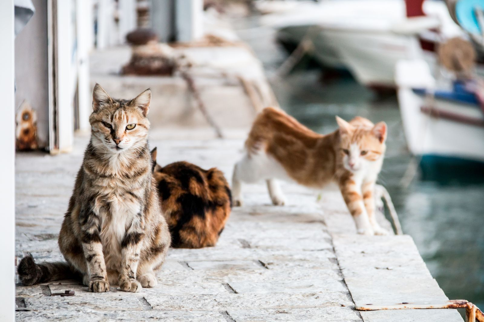 Dream Job Alert! Get Paid to Hang Out with 55 Cats on a