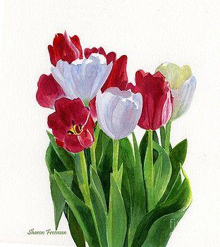 Sharon Freeman - Red and White Tulips