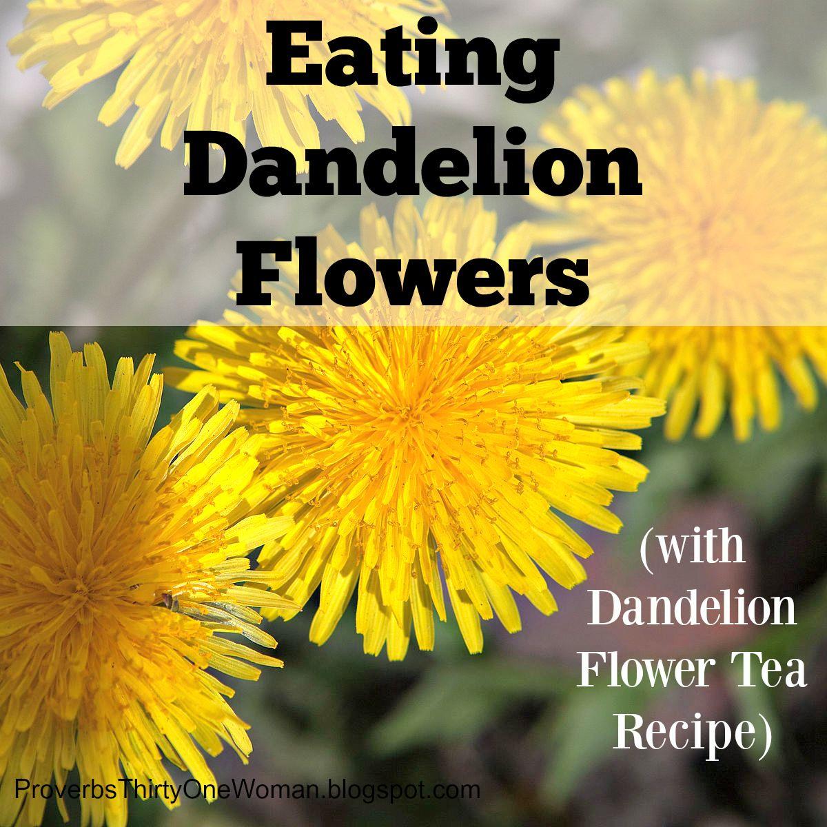 Eating Dandelion Flowers Dandelion Flower Tea Recipe Proverbs 31 Woman Eating Dandelions Flower Tea Dandelion Flower
